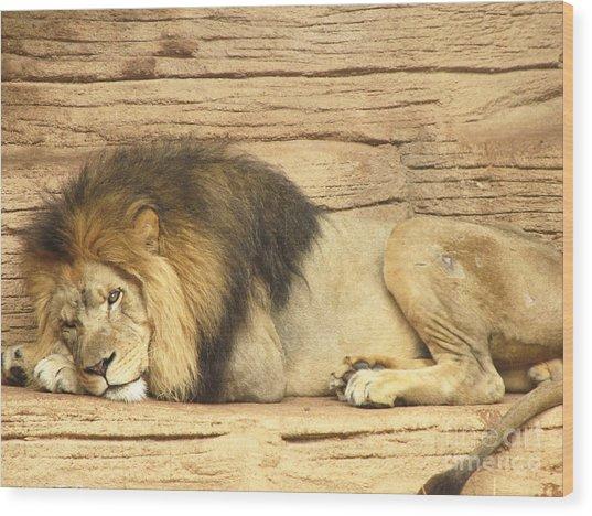 Male Lion Resting Wood Print