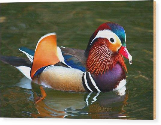 Male Mandarin Wood Print