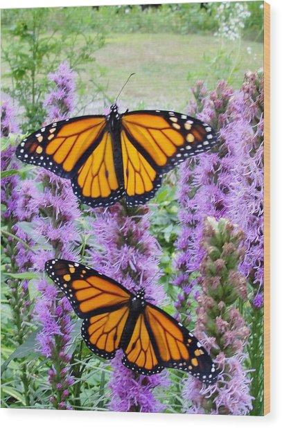 Male Monarchs Wood Print by Katie Bauer