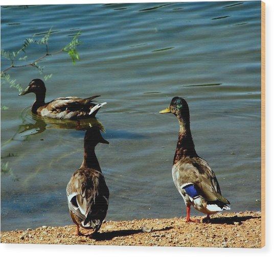 Mallard Ducks Wood Print by David Killian