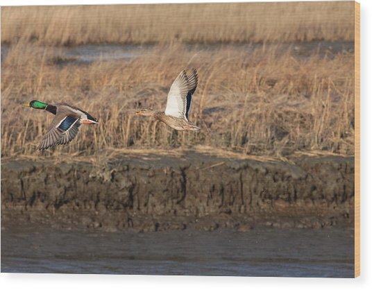 Mallard Ducks Wood Print