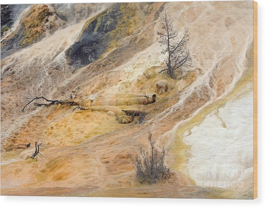 Mammoth Hot Springs Wood Print by Charline Xia