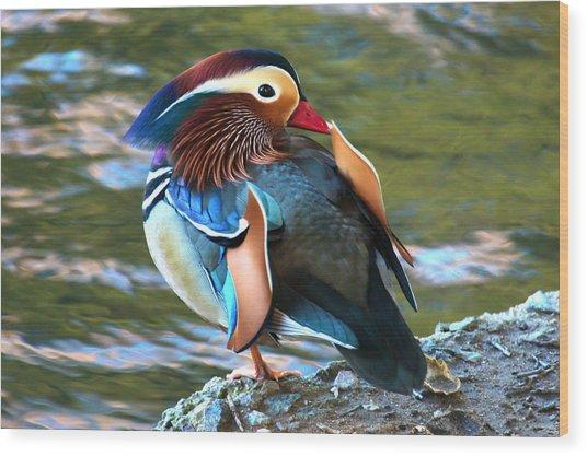 Mandarin Duck Wood Print