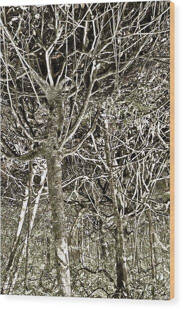 Mangrove Abstract Wood Print