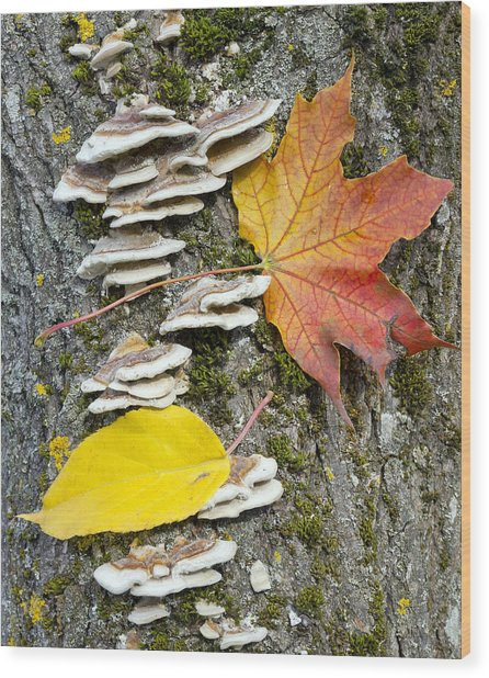 Maple Autumn Leaf On A Tree Trunk Wood Print