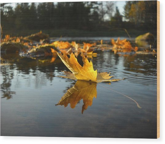 Maple Leaf Floating In River Wood Print