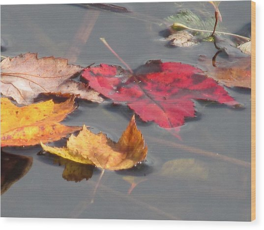Maple Leaf Reflection Wood Print