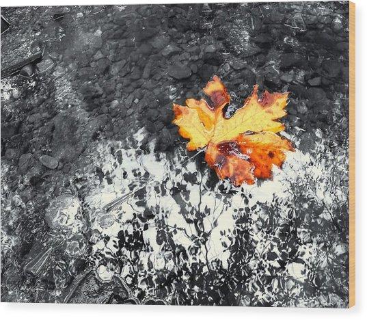 Maple Leaf Selective Color Wood Print