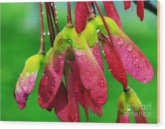 Maple Seeds In The Rain Wood Print