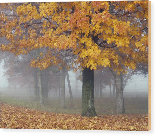Maples In The Mist Wood Print