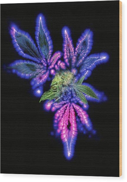 Marijuana Leaf And Bud, Kirlian Artwork Wood Print by Boothgarion