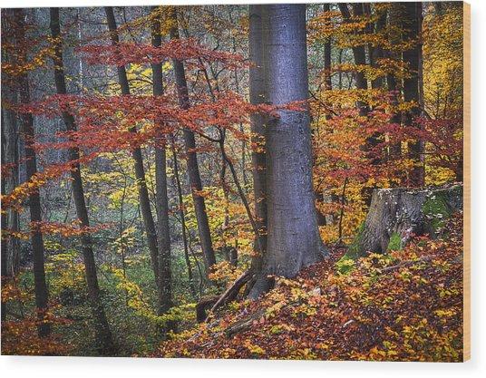 Master Beech Wood Print