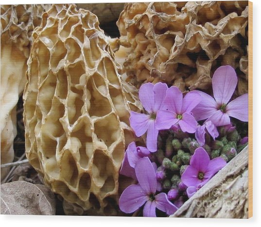 May Is For Morels Wood Print