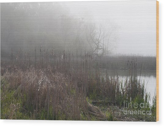 Mclaughlin Bay In The Fog Bulrushes Wood Print by Gary Chapple