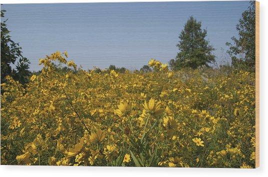 Meadow At Terapin Park Wood Print