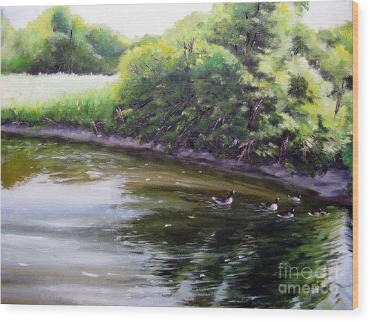 Mid Summer Day Canada Geese Wood Print