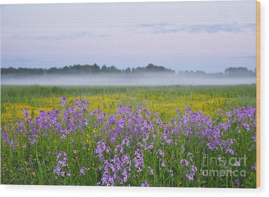Midnight Light With Flowers Wood Print by Conny Sjostrom