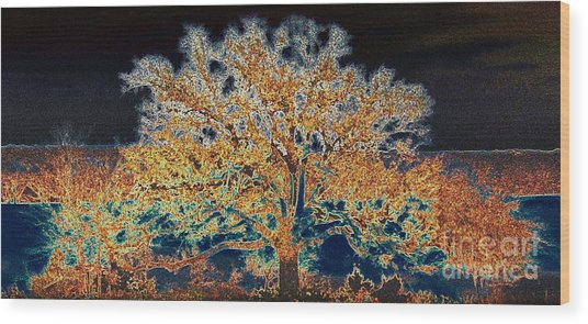 Midnight Moonshine Wood Print by David Carter