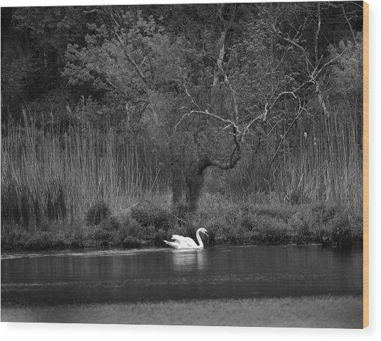 Midnight Swan Wood Print
