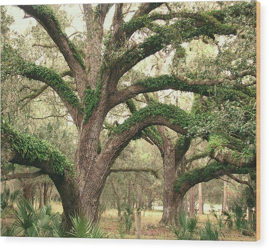 Mighty Oaks Wood Print