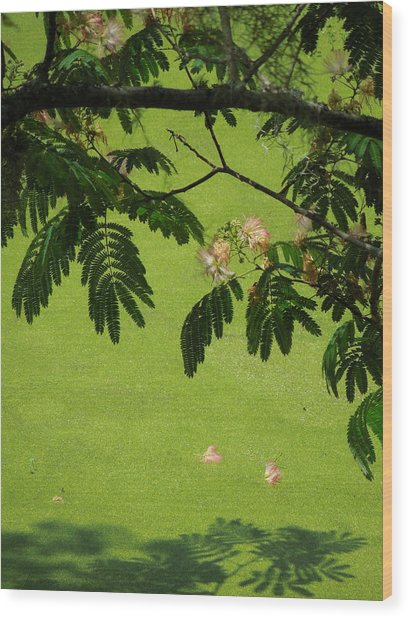Mimosa Over Swamp Wood Print by Peg Toliver