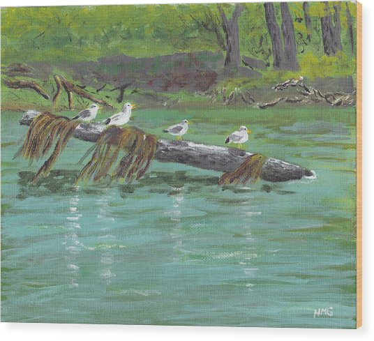 Mississippi River Gulls Wood Print by Nicole Grattan