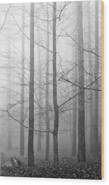 Mistery In The Forrest Wood Print by Filomena Francisco