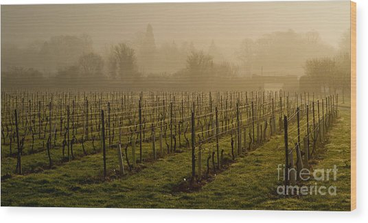Misty Vines Wood Print by Urban Shooters
