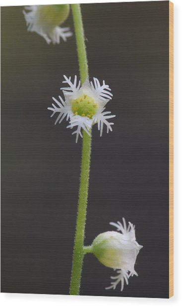 Miterwort Flowers Wood Print