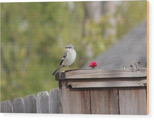 Mockinbird And Red Rose Wood Print by Alain roger  Fotso dada