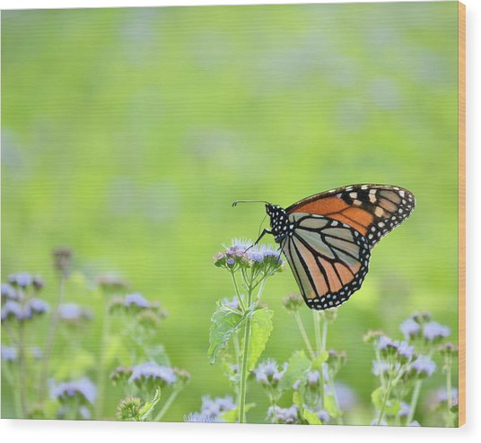 Monarch And Mist Wood Print