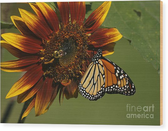 Monarch And The Bee Wood Print
