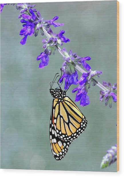Monarch On Purple Wood Print
