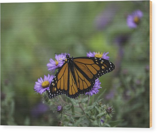 Monarch Wood Print