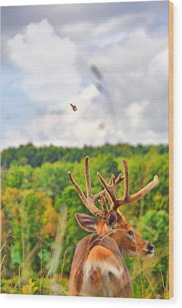 Monarch Velvet Wood Print