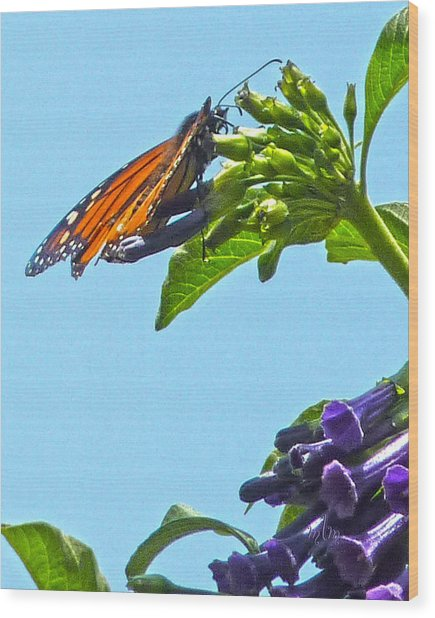 Monarch With Purple Flower Wood Print