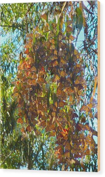 Monarchs At Rest Wood Print