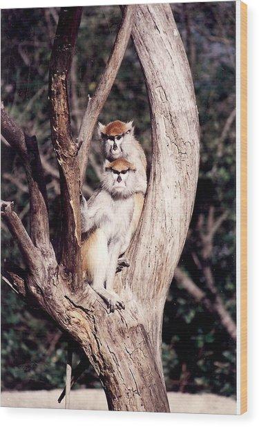 Monkeys In The Tree Wood Print