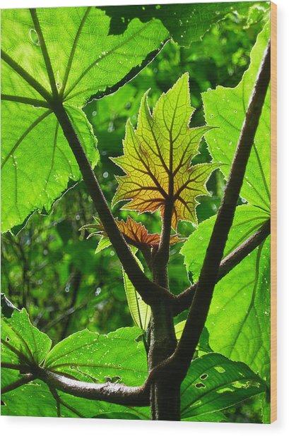 Monteverde Cloud Forest Costa Rica Fine Art Print Wood Print by Ian Stevenson