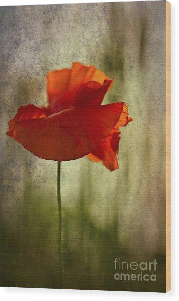 Moody Poppy. Wood Print