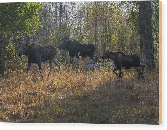 Moose Family Wood Print