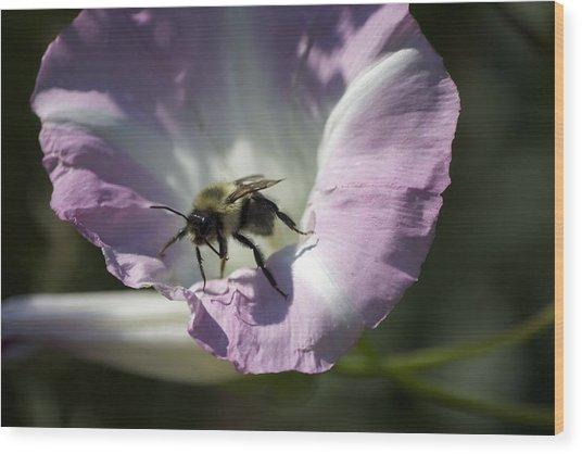 Morning Bumblebee Wood Print