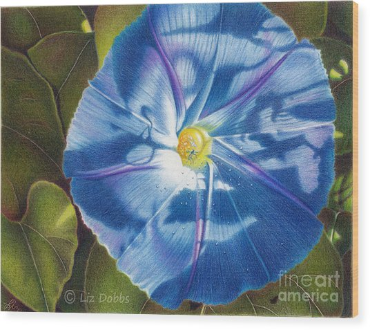 Morning Glory B Wood Print by Elizabeth Dobbs