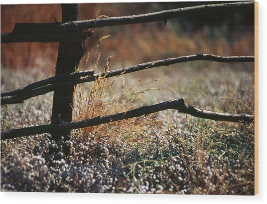Morning Grass Wood Print by Carlos Diaz
