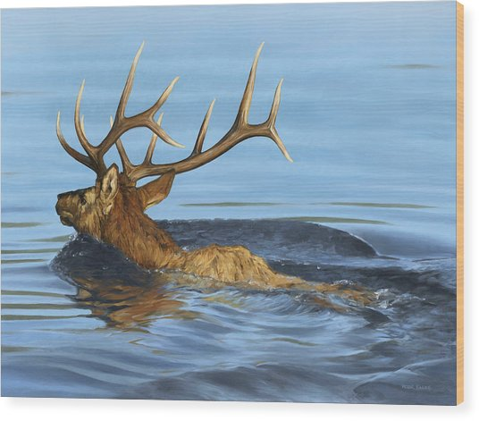 Morning Swim Wood Print