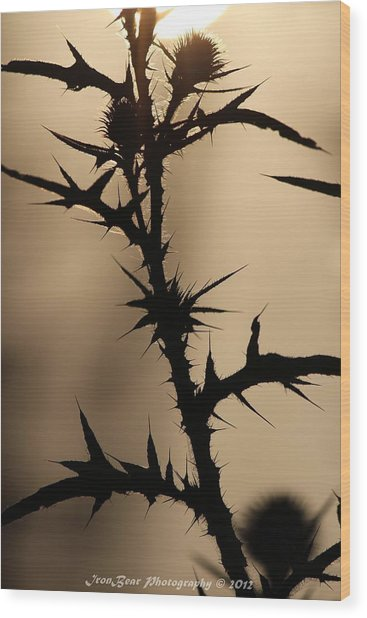 Morning Thorns Wood Print by Ted Albert