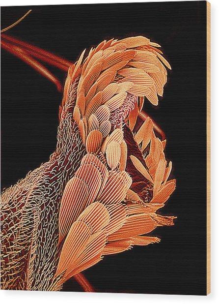 Mosquito Balance Organ, Sem Wood Print by Susumu Nishinaga