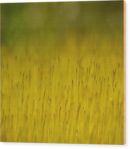 Moss In Yellow Wood Print