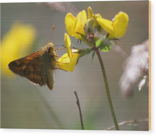 Moth Life Wood Print