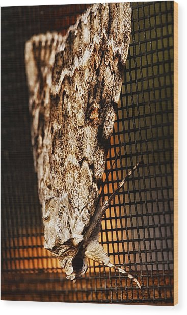 Moth Wood Print by Linda Tiepelman